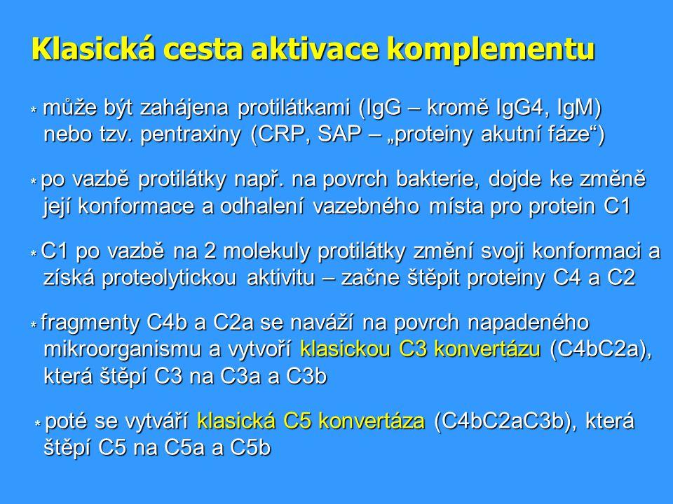 """Klasická cesta aktivace komplementu * může být zahájena protilátkami (IgG – kromě IgG4, IgM) nebo tzv. pentraxiny (CRP, SAP – """"proteiny akutní fáze"""")"""