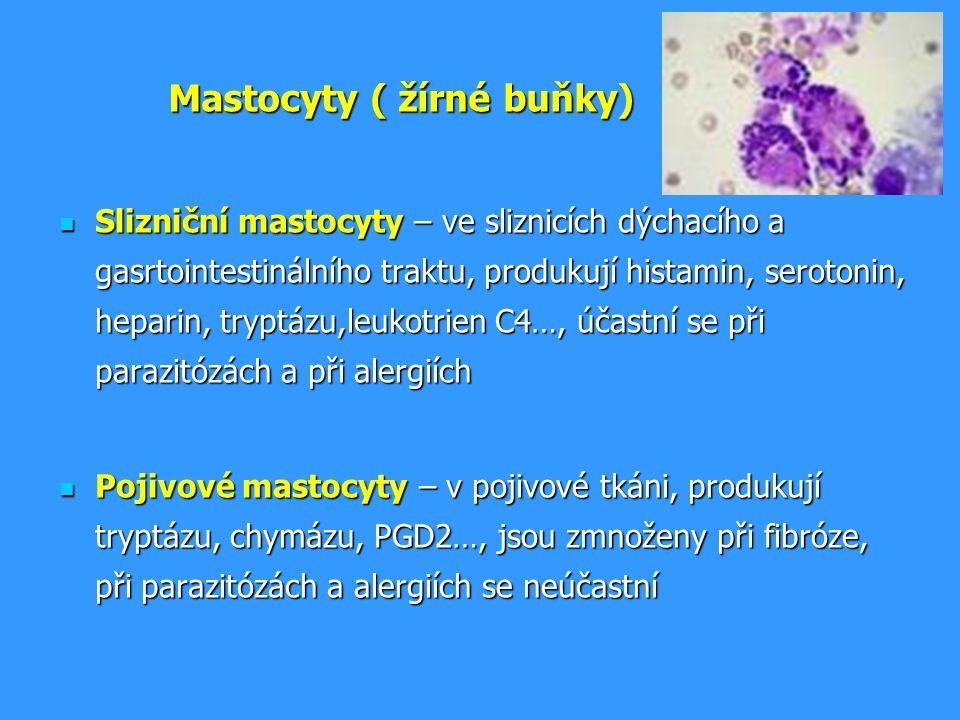 Mastocyty ( žírné buňky) Slizniční mastocyty – ve sliznicích dýchacího a gasrtointestinálního traktu, produkují histamin, serotonin, heparin, tryptázu