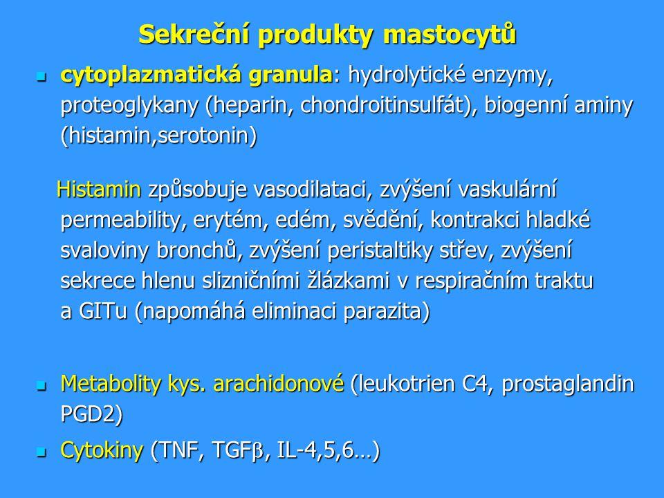 Sekreční produkty mastocytů cytoplazmatická granula: hydrolytické enzymy, proteoglykany (heparin, chondroitinsulfát), biogenní aminy (histamin,seroton