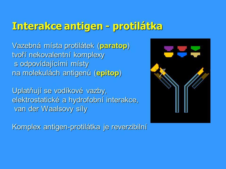 Interakce antigen - protilátka Vazebná místa protilátek (paratop) tvoří nekovalentní komplexy s odpovídajícími místy na molekulách antigenů (epitop) U