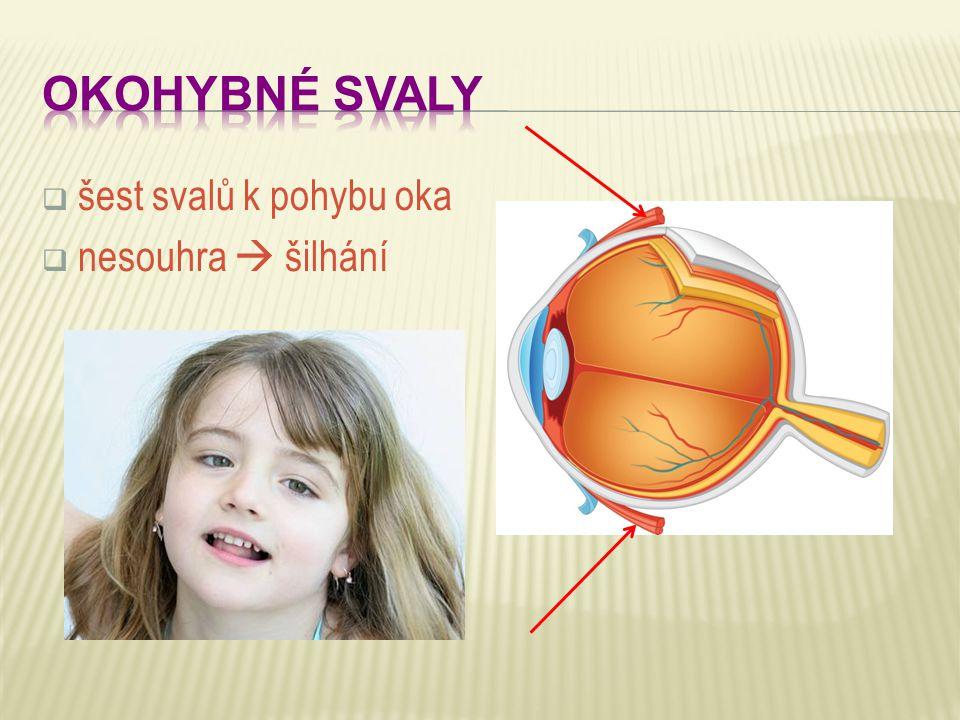  šest svalů k pohybu oka  nesouhra  šilhání