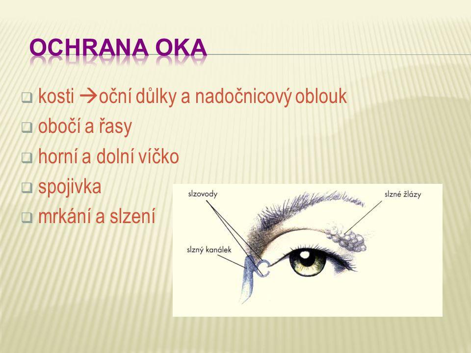  kosti  oční důlky a nadočnicový oblouk  obočí a řasy  horní a dolní víčko  spojivka  mrkání a slzení