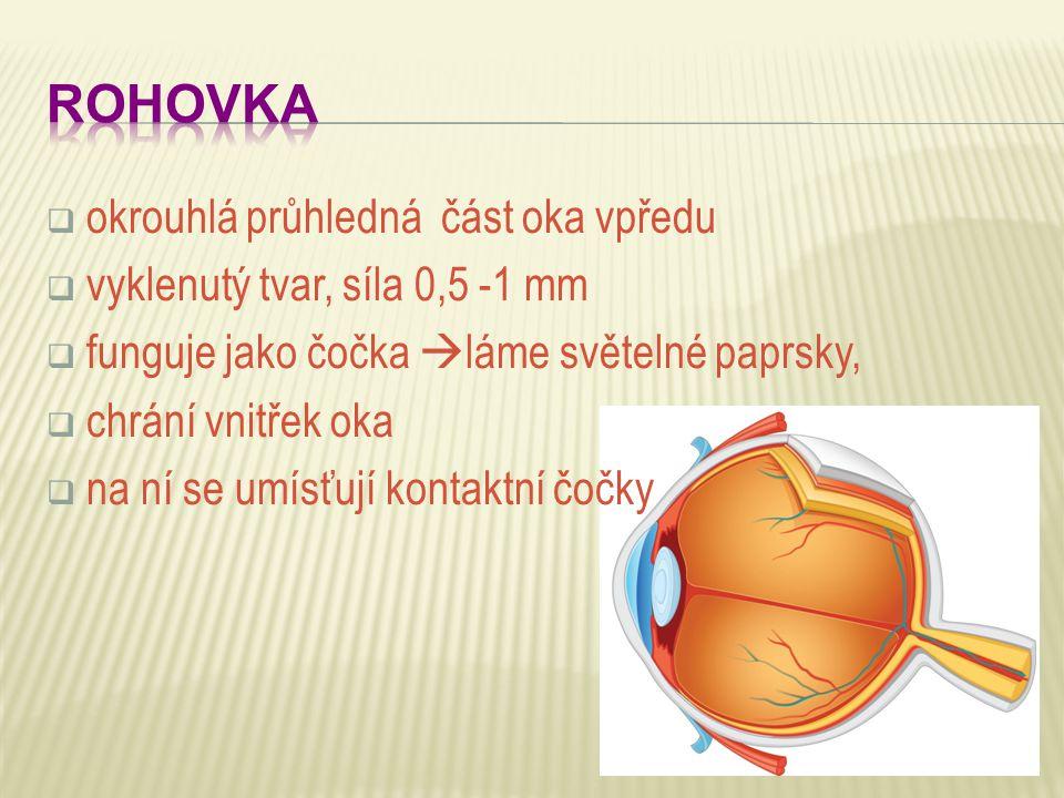  okrouhlá průhledná část oka vpředu  vyklenutý tvar, síla 0,5 -1 mm  funguje jako čočka  láme světelné paprsky,  chrání vnitřek oka  na ní se um