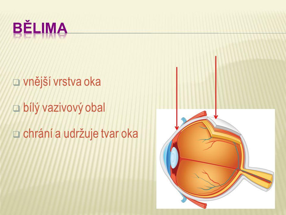  vnější vrstva oka  bílý vazivový obal  chrání a udržuje tvar oka
