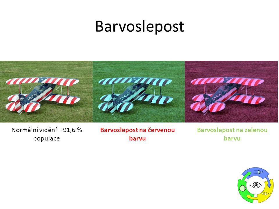 Normální vidění – 91,6 % populace Barvoslepost na červenou barvu Barvoslepost na zelenou barvu