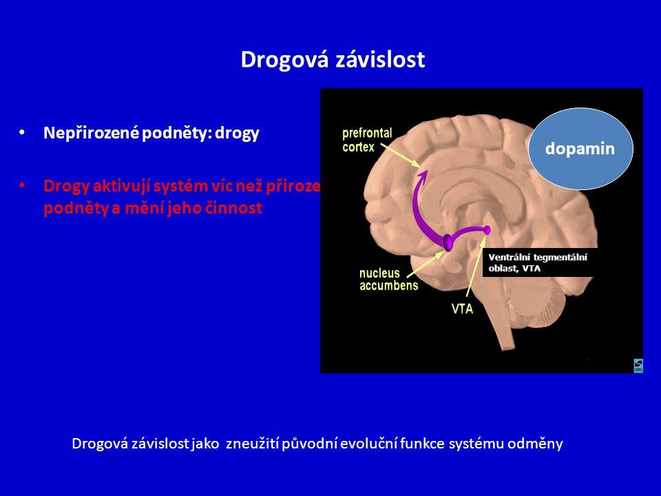 Drogová závislost Nepřirozené podněty: drogy Drogy aktivují systém víc než přirozené podněty a mění jeho činnost Ventrální tegmentální oblast, VTA dop