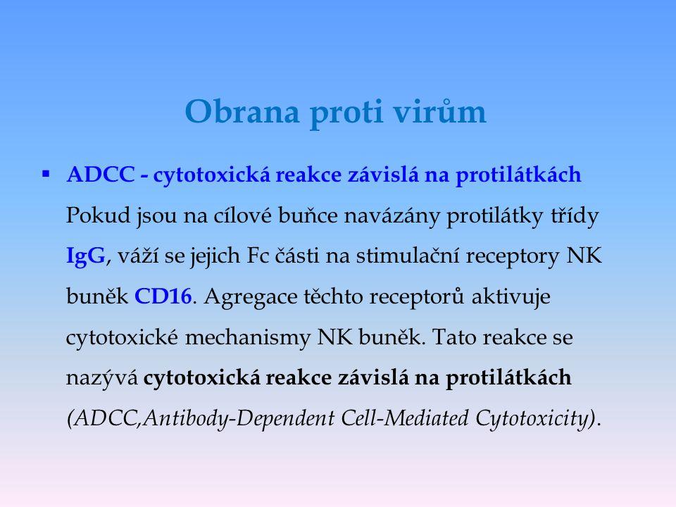 Obrana proti virům  ADCC - cytotoxická reakce závislá na protilátkách Pokud jsou na cílové buňce navázány protilátky třídy IgG, váží se jejich Fc čás