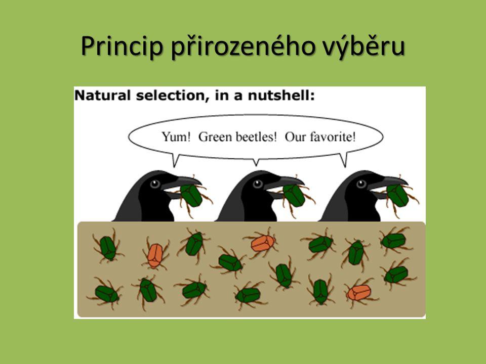 Princip přirozeného výběru