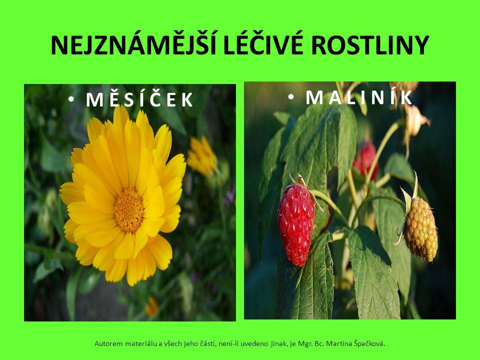 NEJZNÁMĚJŠÍ LÉČIVÉ ROSTLINY M Ě S Í Č E K M A L I N Í K Autorem materiálu a všech jeho částí, není-li uvedeno jinak, je Mgr. Bc. Martina Špačková.