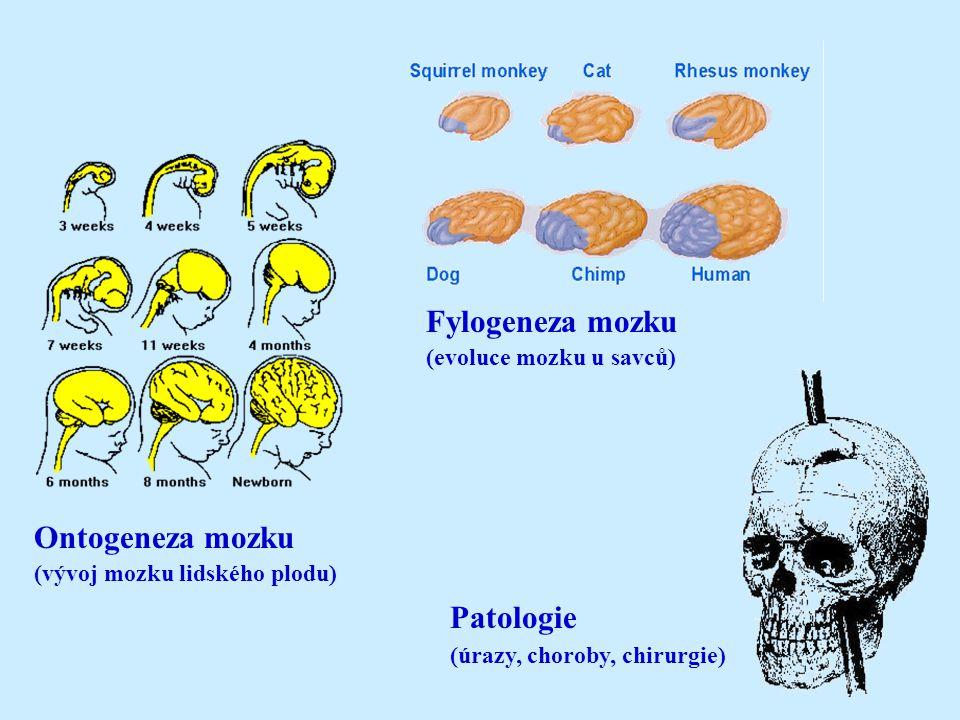 Fylogeneza mozku (evoluce mozku u savců) Ontogeneza mozku (vývoj mozku lidského plodu) Patologie (úrazy, choroby, chirurgie)