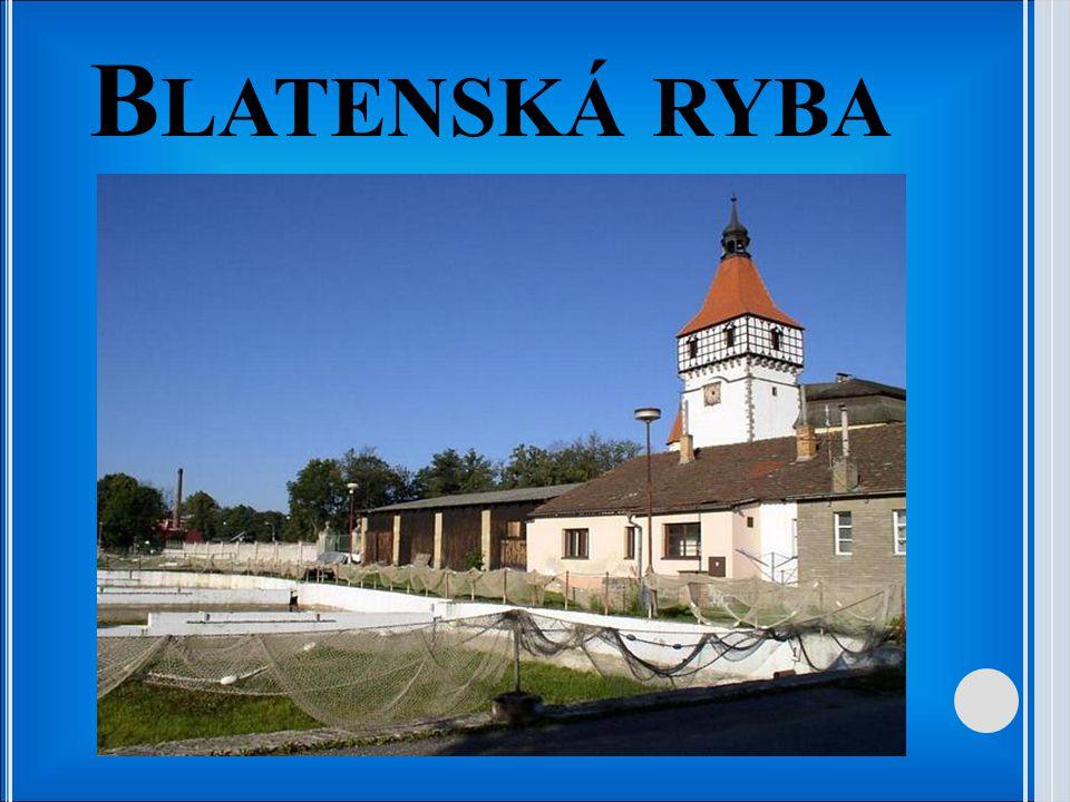 B LATENSKÁ RYBA