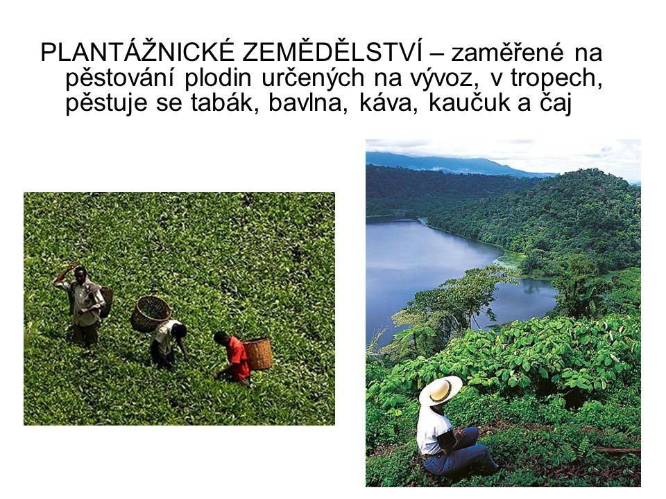 PLANTÁŽNICKÉ ZEMĚDĚLSTVÍ – zaměřené na pěstování plodin určených na vývoz, v tropech, pěstuje se tabák, bavlna, káva, kaučuk a čaj