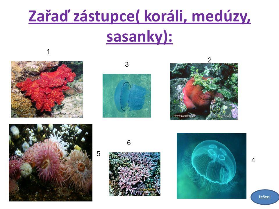 Zařaď zástupce( koráli, medúzy, sasanky): 1 3 2 5 6 4 řešení