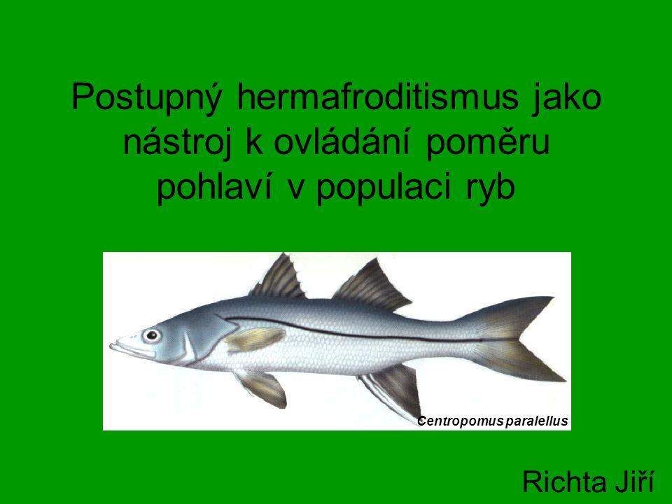 Postupný hermafroditismus jako nástroj k ovládání poměru pohlaví v populaci ryb Richta Jiří Centropomus paralellus