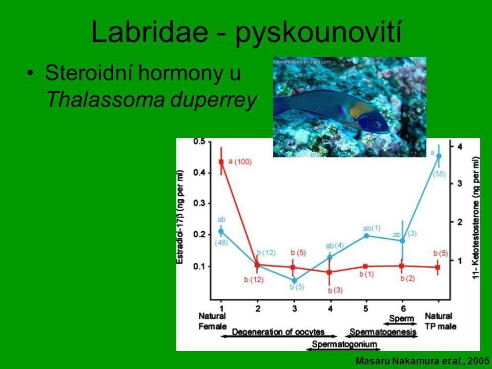 Labridae - pyskounovití Steroidní hormony u Thalassoma duperrey Masaru Nakamura et al., 2005