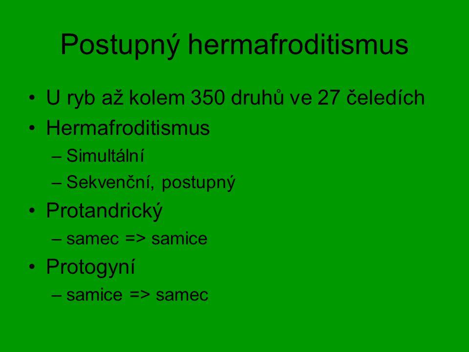 Postupný hermafroditismus U ryb až kolem 350 druhů ve 27 čeledích Hermafroditismus –Simultální –Sekvenční, postupný Protandrický –samec => samice Prot