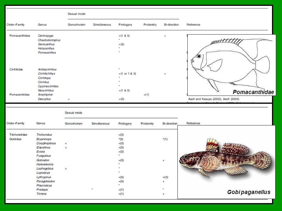 rod Amphirion - Klauni Harém samců s dominantní samicí Saori Miura et al., 2007 Amphiprion clarkii