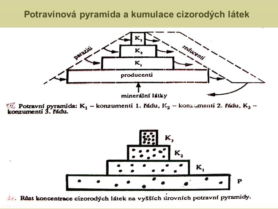 Potravinová pyramida a kumulace cizorodých látek