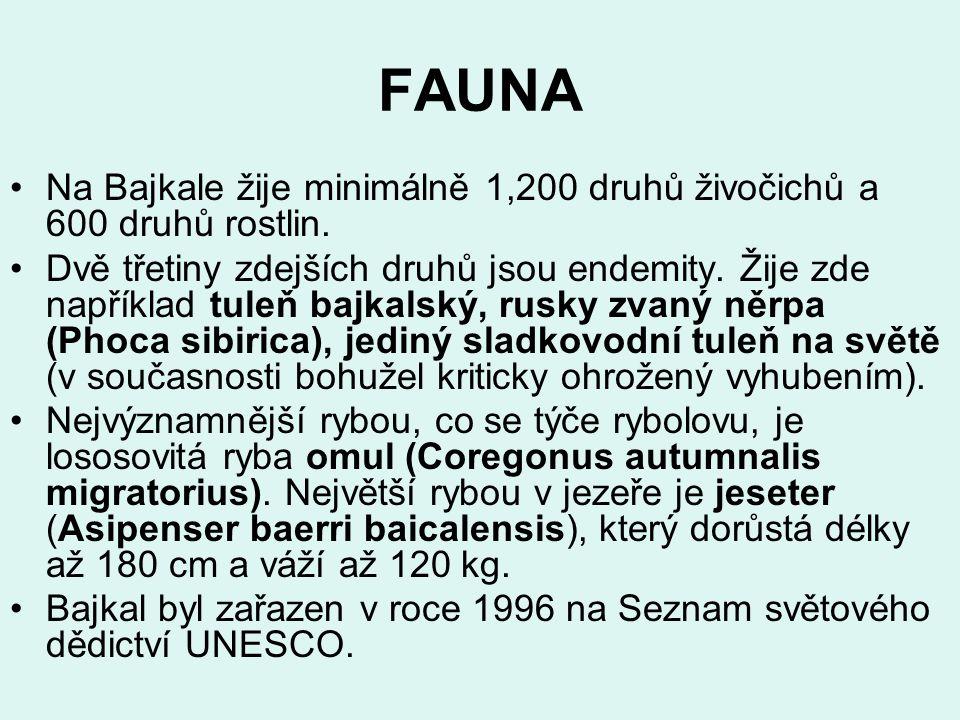 FAUNA Na Bajkale žije minimálně 1,200 druhů živočichů a 600 druhů rostlin. Dvě třetiny zdejších druhů jsou endemity. Žije zde například tuleň bajkalsk
