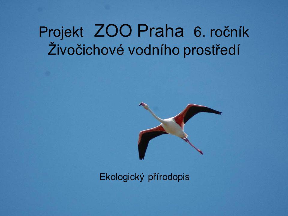 Projekt ZOO Praha 6. ročník Živočichové vodního prostředí Ekologický přírodopis