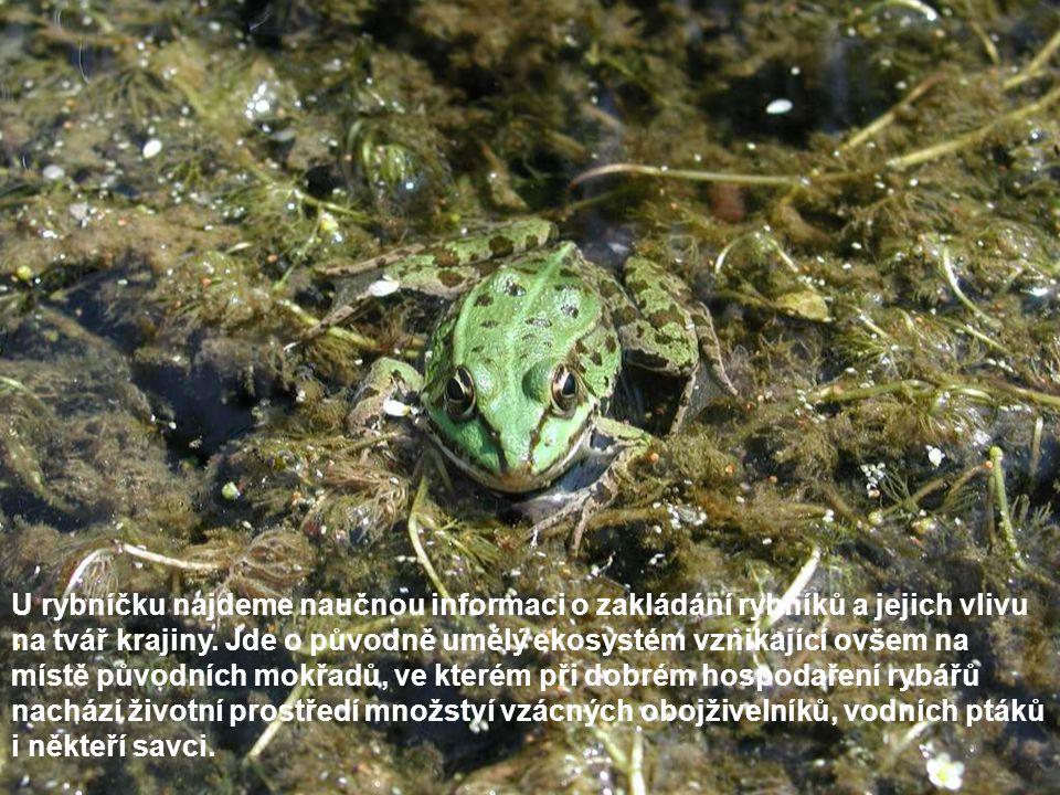 . U rybníčku najdeme naučnou informaci o zakládání rybníků a jejich vlivu na tvář krajiny. Jde o původně umělý ekosystém vznikající ovšem na místě pův