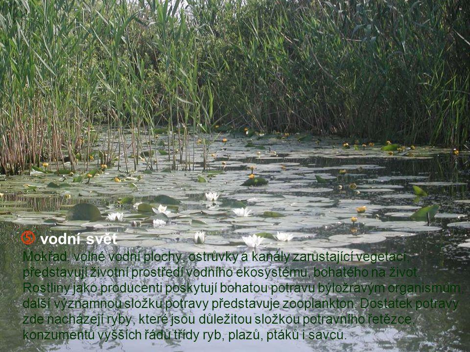  živočichové naší přírody V malých voliérách této části ZOO je možné pozorovat zástupce řádu pěvců, holubovitých, šplhavců, kteří žijí v naší přírodě.