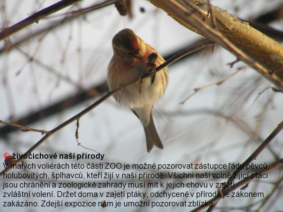  živočichové naší přírody V malých voliérách této části ZOO je možné pozorovat zástupce řádu pěvců, holubovitých, šplhavců, kteří žijí v naší přírodě