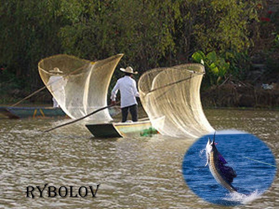 Obecné informace - rybolov Využití ryb: a) Jako potravina b) Zpracování na moučku, rybí tuk c) Farmaceutický průmysl .