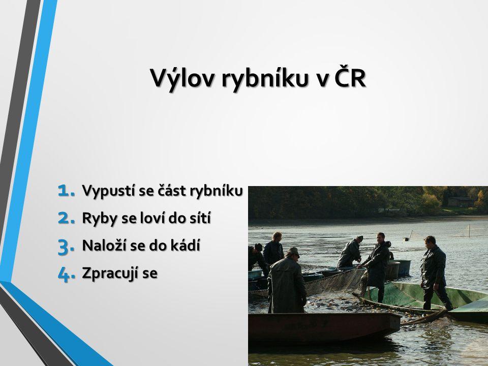 Výlov rybníku v ČR 1. Vypustí se část rybníku 2. Ryby se loví do sítí 3. Naloží se do kádí 4. Zpracují se