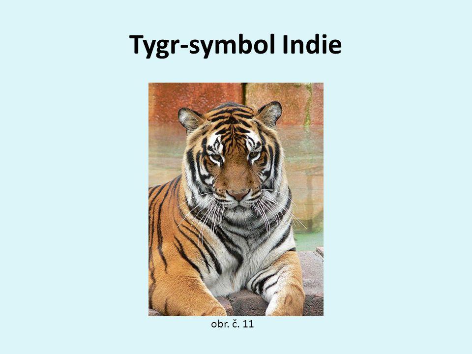Tygr-symbol Indie obr. č. 11