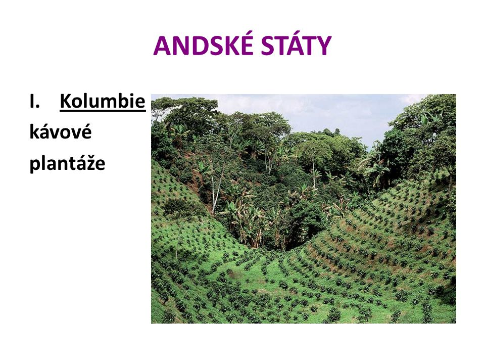 ANDSKÉ STÁTY I.Kolumbie kávové plantáže