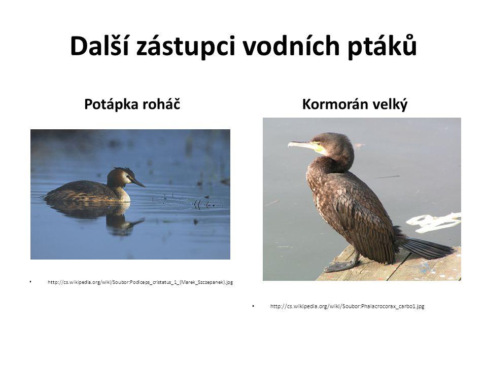 Další zástupci vodních ptáků Potápka roháč http://cs.wikipedia.org/wiki/Soubor:Podiceps_cristatus_1_(Marek_Szczepanek).jpg Kormorán velký http://cs.wikipedia.org/wiki/Soubor:Phalacrocorax_carbo1.jpg