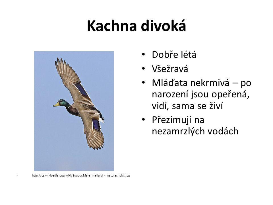 Kachna divoká http://cs.wikipedia.org/wiki/Soubor:Male_mallard_-_natures_pics.jpg Dobře létá Všežravá Mláďata nekrmivá – po narození jsou opeřená, vidí, sama se živí Přezimují na nezamrzlých vodách