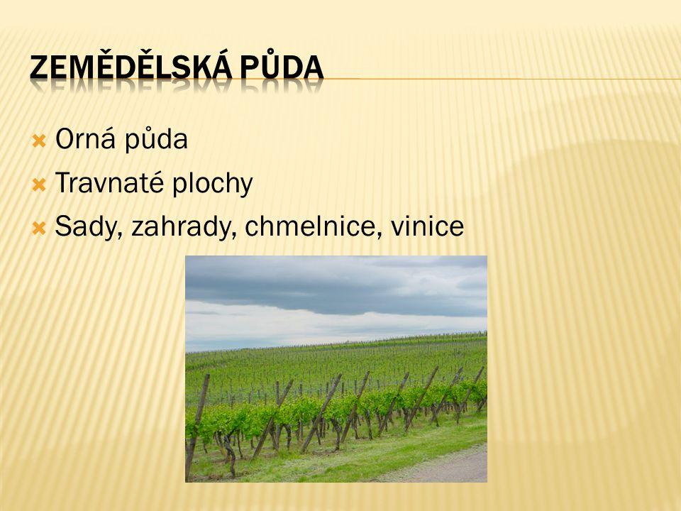  Orná půda  Travnaté plochy  Sady, zahrady, chmelnice, vinice
