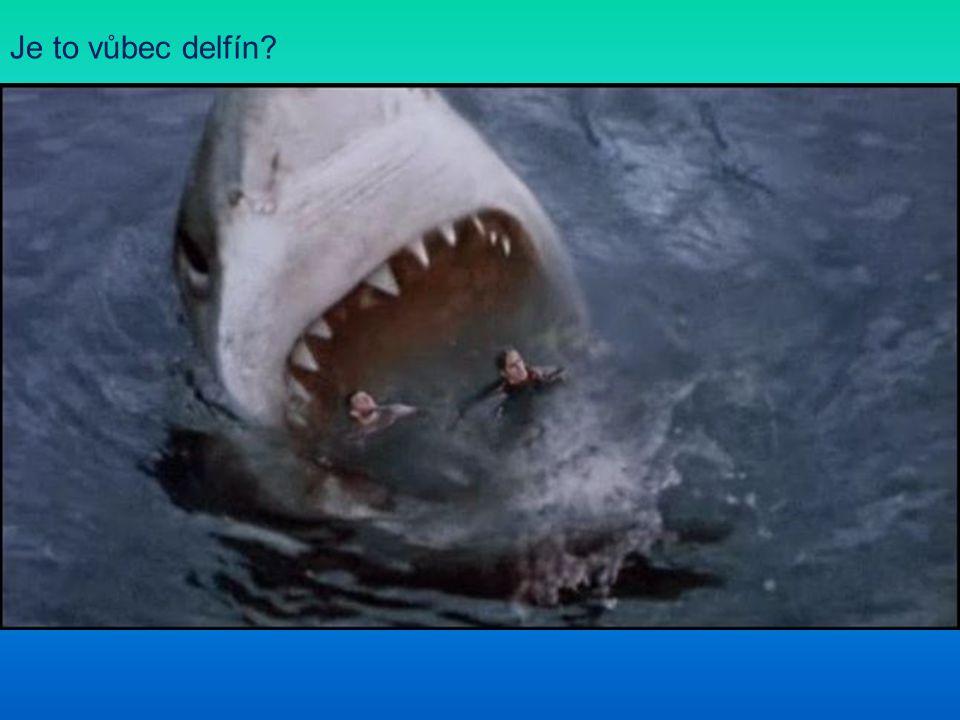 Je to vůbec delfín
