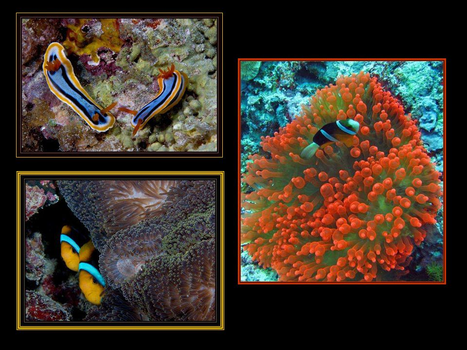 Najdeme zde exklusivní potápěčské safari v oblasti s nejméně dotčenými korálovými útesy na světě