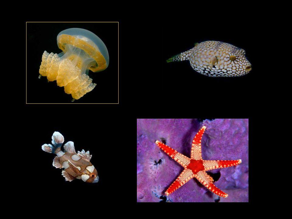 V moři se zde ale také skrývá i nebezpečí - nejrůznější jedovaté ryby, hadi a korály.
