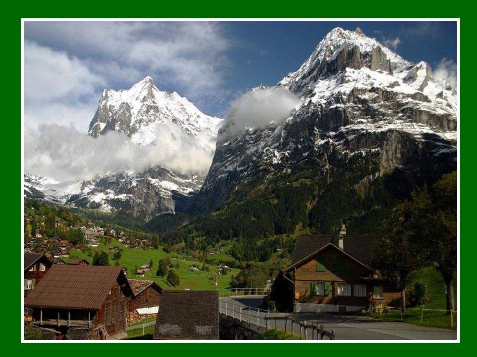 Vidět protěž je prostě radost. Žádná jiná rostlina k Alpám nepatří víc, dominuje i mnoha městským znakům, rodovým erbům... v jejím jménu se pořádají l
