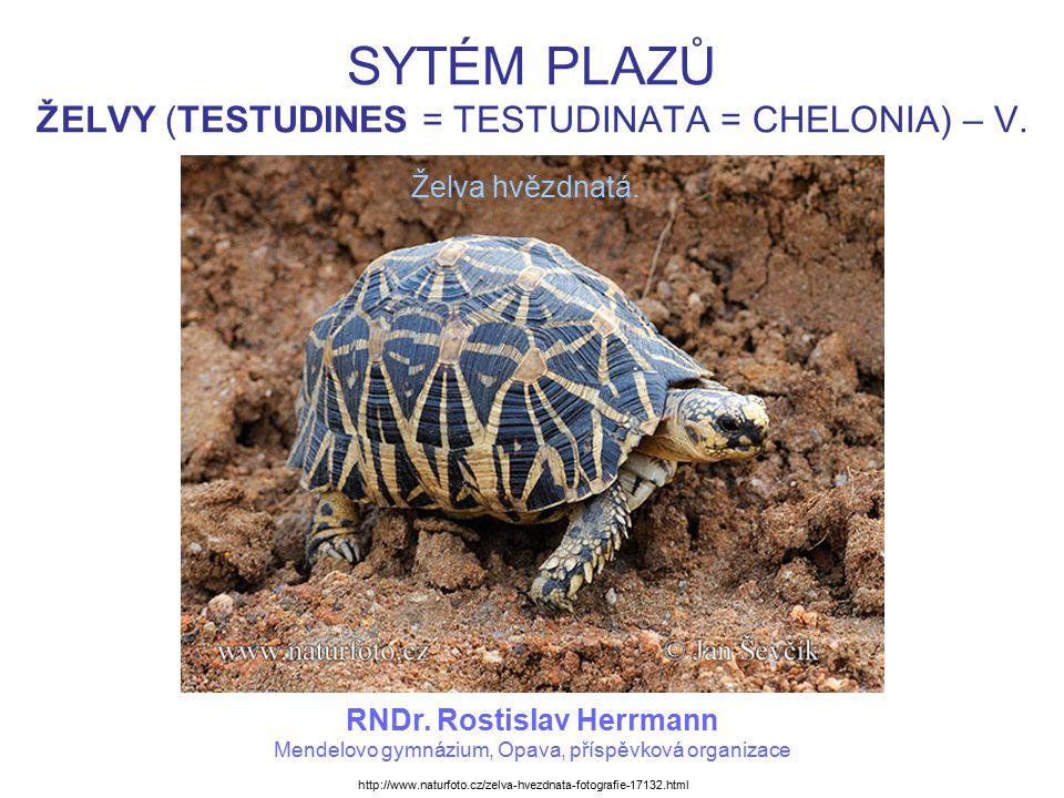ŽELVY (TESTUDINES) ŽELVOVITÍ Suchozemské želvy.Aktivní většinou ve dne a býložravé.