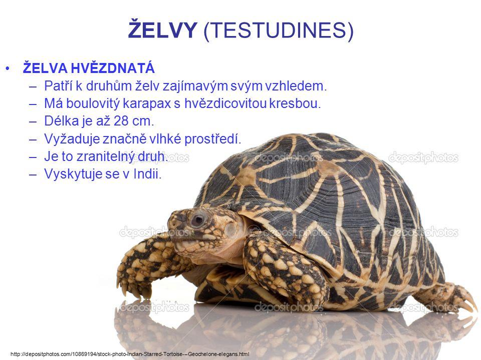ŽELVY (TESTUDINES) ŽELVA HVĚZDNATÁ –Patří k druhům želv zajímavým svým vzhledem. –Má boulovitý karapax s hvězdicovitou kresbou. –Délka je až 28 cm. –V
