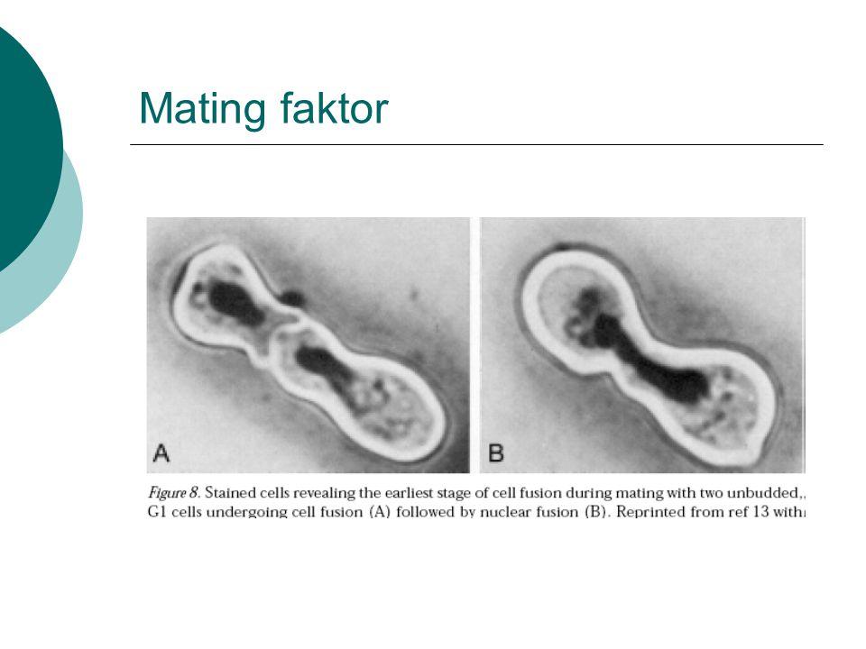 Mating faktor