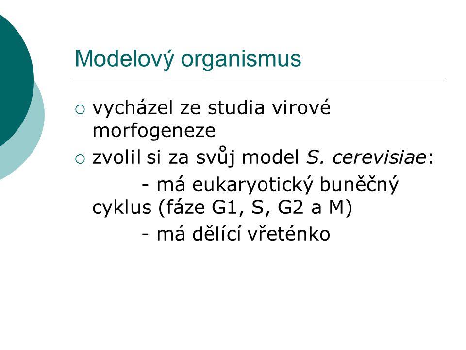 Modelový organismus  vycházel ze studia virové morfogeneze  zvolil si za svůj model S.