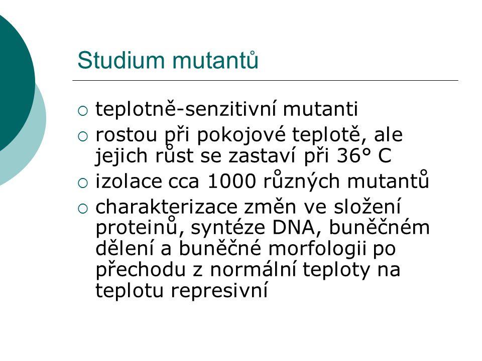 Studium mutantů  teplotně-senzitivní mutanti  rostou při pokojové teplotě, ale jejich růst se zastaví při 36° C  izolace cca 1000 různých mutantů  charakterizace změn ve složení proteinů, syntéze DNA, buněčném dělení a buněčné morfologii po přechodu z normální teploty na teplotu represivní