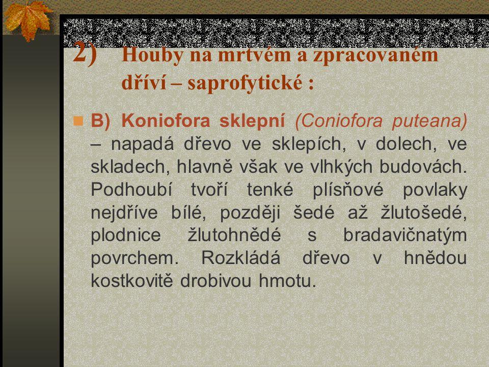 2) Houby na mrtvém a zpracovaném dříví – saprofytické : A)Dřevomorka domácí (Serpula/Merulius/ lacrymans) – je nejnebezpečnějšíškůdce dřeva v obydlích