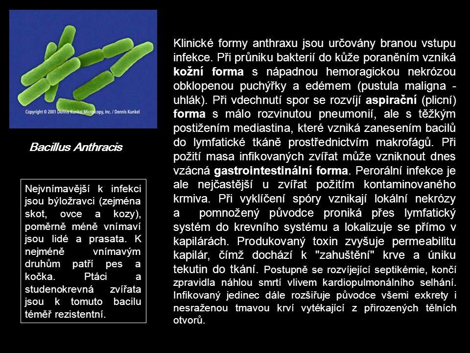 Bacillus Anthracis Klinické formy anthraxu jsou určovány branou vstupu infekce. Při průniku bakterií do kůže poraněním vzniká kožní forma s nápadnou h