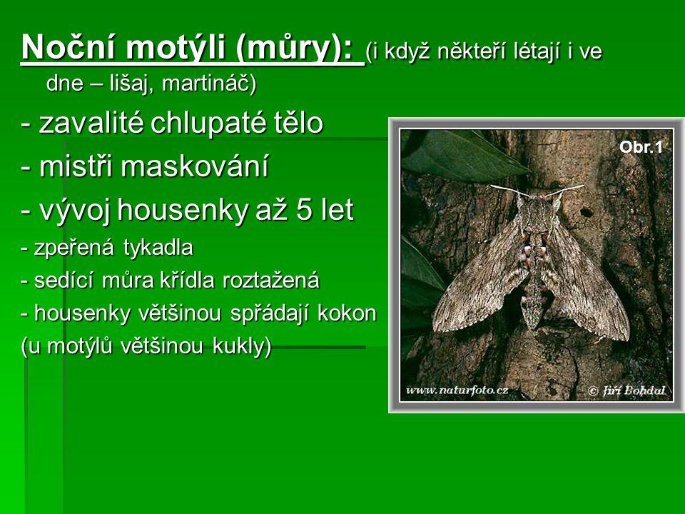 Noční motýli (můry): (i když někteří létají i ve dne – lišaj, martináč) - zavalité chlupaté tělo - mistři maskování - vývoj housenky až 5 let - zpeřen