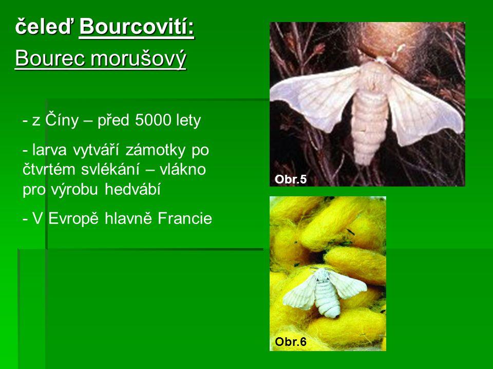 čeleď Bourcovití: Bourec morušový - z Číny – před 5000 lety - larva vytváří zámotky po čtvrtém svlékání – vlákno pro výrobu hedvábí - V Evropě hlavně