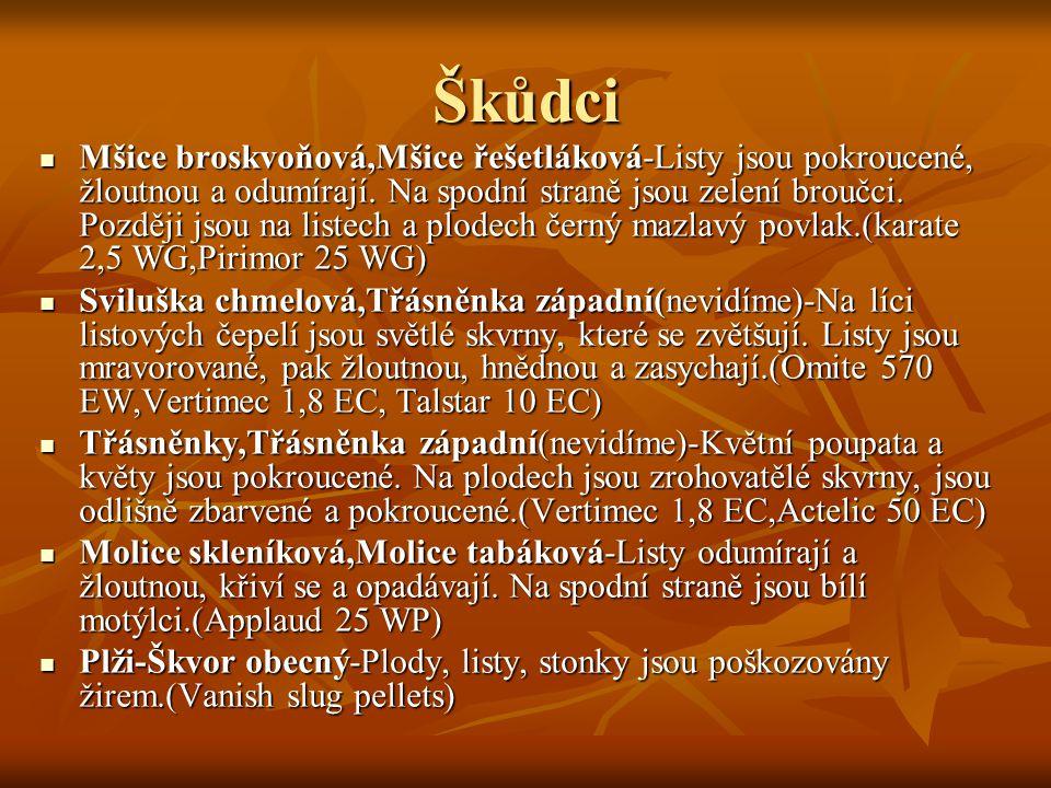 Škůdci Mšice broskvoňová,Mšice řešetláková-Listy jsou pokroucené, žloutnou a odumírají.