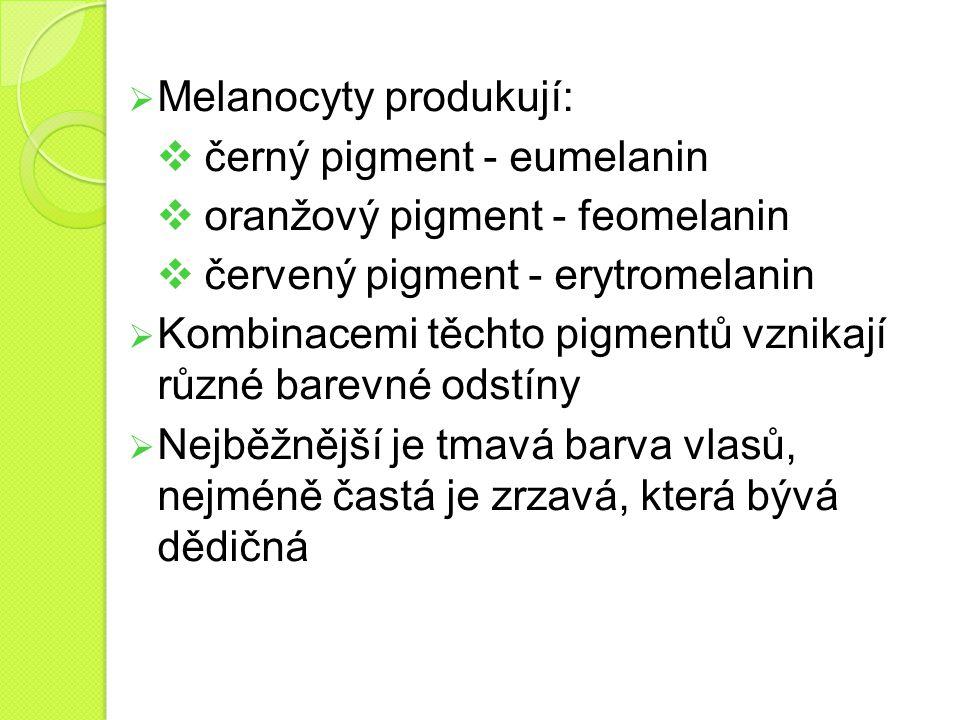  Melanocyty produkují:  černý pigment - eumelanin  oranžový pigment - feomelanin  červený pigment - erytromelanin  Kombinacemi těchto pigmentů vz