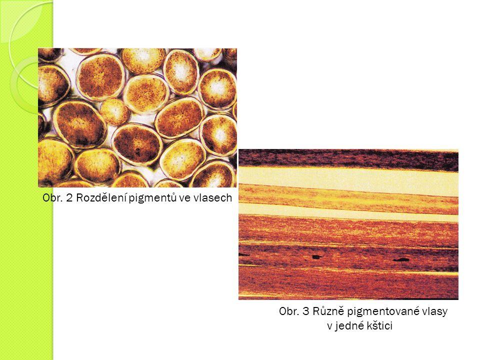 Obr. 2 Rozdělení pigmentů ve vlasech Obr. 3 Různě pigmentované vlasy v jedné kštici